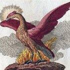 phoenix34